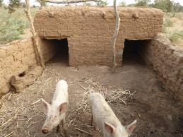 Enclos pour les cochons