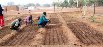 Début des plantations