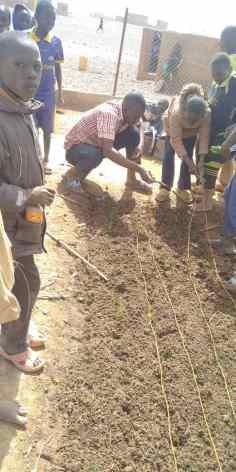 105 Les lignes de plantatin sont tirées au cordeau